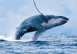 2-Hour Maui Whale Watching Cruise! (Ma'alaea Harbor)