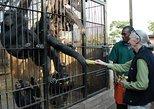 I day chimpanzee sanctuary Ngamba Island