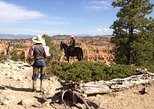 Horseback Riding through Red Canyon