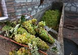 A Special Winery Experience in the old family Cellars