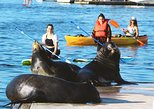 Kayak or Paddleboard with Sea Lions and Get Free Photos
