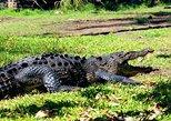 Amazing cocodriles & turtles Private Tour