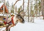 Lapland Reindeer Safari from Levi