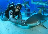 Caribbean - Bahamas: A 2-Tank Shark Dive Activity in Bahamas