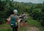 Central America - Costa Rica: Cafe de Guanacaste Coffee Tour