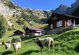 Swiss mountain farming, visit the remote homes, caress cattle, enjoy cheese