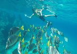 Mexico - Baja California Sur: Land's End & Snorkel Tour in a Glass Bottom Boat (VisitA Cabo)