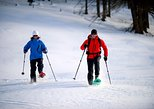 1/2 DAY PRIVATE Guided snowshoeing tour of Yellowstone National Park!