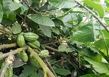 El Trapiche Tour: Learn about Coffee, Chocolate & Sugarcane