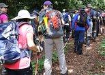1 Day Kilimanjaro Hike Machame Route