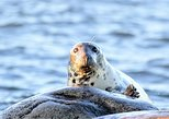 90-Minute Seal Watching Cruise in Narragansett Bay from Wickford