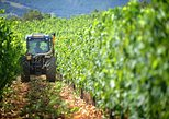 Chianti Vineyards Tours in Private Luxury Van from Florence
