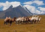 10 Days tour into Mongolian Gobi desert region