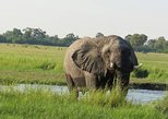 1 Day Game Drive - Moremi Game Reserve