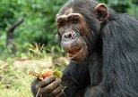 1 day Fishing and Chimpanzee Island tour