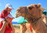 Mexico - Baja California Sur: Cabo Camel Encounter and Safari Ride (includes tacos & tequila tasting)