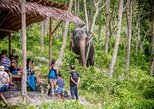 A Morning with the Elephants at Phuket Elephant Sanctuary (PES)