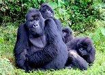 1 Day Gorilla Transfer