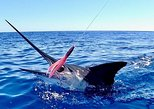 Best Deep Sea Fishing in Turks and Caicos Islands ,MORNING, UP TO 14 Passengers