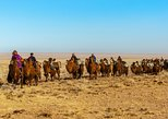 11 Days Camel Caravan of South Gobi