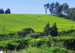 Coffee farm and factory tour from Nairobi city
