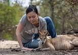 Sydney Secrets - Nature, wildlife and more! Full-day, private tour.