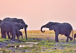 Africa & Mid East - Botswana: chobe 3hr sunset boat cruise