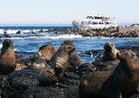 Phillip Island Seal-Watching Cruise