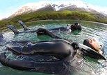 Snorkeling entre glaciares Lago del Desierto. El Chalten, ARGENTINA