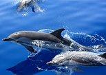 Dolphin Mini Cruise. Lanzarote, ESPAÑA