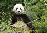 admire the pandas at tiergarten schonbrunn