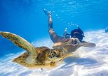 Australia & Pacific - Cook Islands: Cook Islands ultimate Turtle Tour