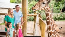 San Antonio Zoo General Admission, San Antonio, Half-day Tours
