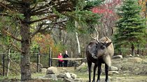 Ecomuseum Zoo: Discover Québec's Wildlife in Summer , Montreal, Museum Tickets & Passes