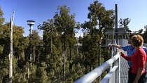 West Coast Tree Top Walk Experience, South Island, Kayaking & Canoeing