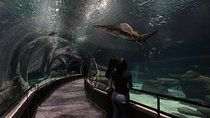 Early-Access Entrance Ticket to AquaRio Aquarium , Rio de Janeiro, Attraction Tickets