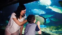 Scottish SEA LIFE Sanctuary General Admission, Southern Scotland, Attraction Tickets