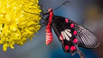 Butterfly Park and Insect Kingdom Admission Ticket, Singapore, Attraction Tickets