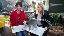 Adelaide Zoo Behind the Scenes Experience: Lemur Feeding, Adelaide, Zoo Tickets & Passes