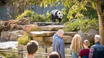 Adelaide Zoo Behind the Scenes Experience: Panda and Friends Tour, Adelaide, null