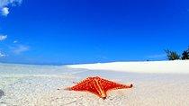 Starfish and Stingray City Adventure with Snorkeling,