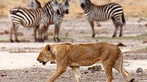 6 DaysTsavo - Amboseli - Lake Nakuru - Lake Naivasha - Masai Mara -Kenya Safari, Mombasa, Cultural...