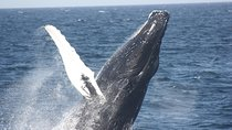 Panama Whale Watching Tour, Panama City, Nature & Wildlife