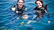 Full-Day Diving for Beginners at Coiba National Park, Panama, Scuba Diving
