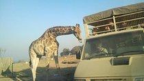 Full Day Safari Experience From Johannesburg With Ziplining , Johannesburg, Nature & Wildlife