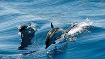 Gibraltar Dolphin Adventure, Gibraltar, Nature & Wildlife