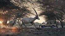 Nature and Wild Life Adventure in Sir Bani Yas Desert Island, Abu Dhabi, 4WD, ATV & Off-Road Tours