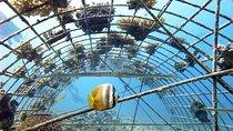Fun Dives, Gili Islands, Day Trips