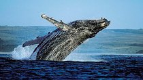 Samana Bus Whale-Watching Tour, Dominican Republic, Dolphin & Whale Watching