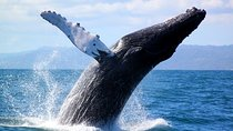 Full-Day Samana Whales Watching Season By Bus, Punta Cana, Dolphin & Whale Watching